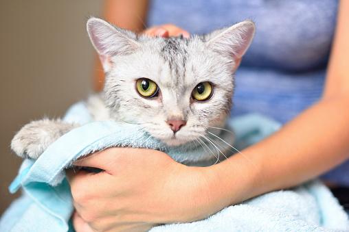 lavaggio gatti a Milano