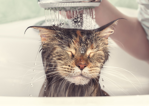 lavaggio e tosatura gatti a Milano