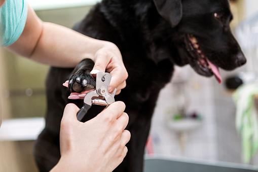 taglio unghie cani a Milano