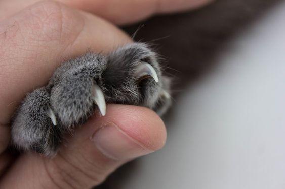 taglio unghie gatti milano